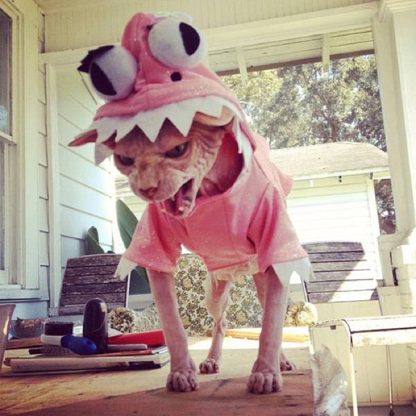 Ridiculous Cat Costume Rage