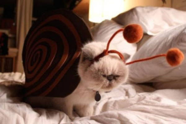 cat-costume-snail