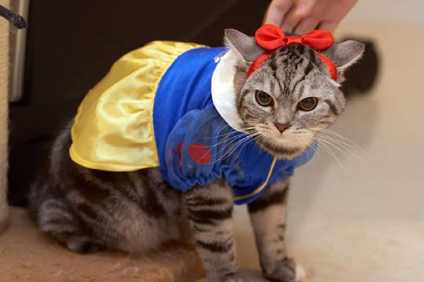 Ridiculous Cat Costume Snow White