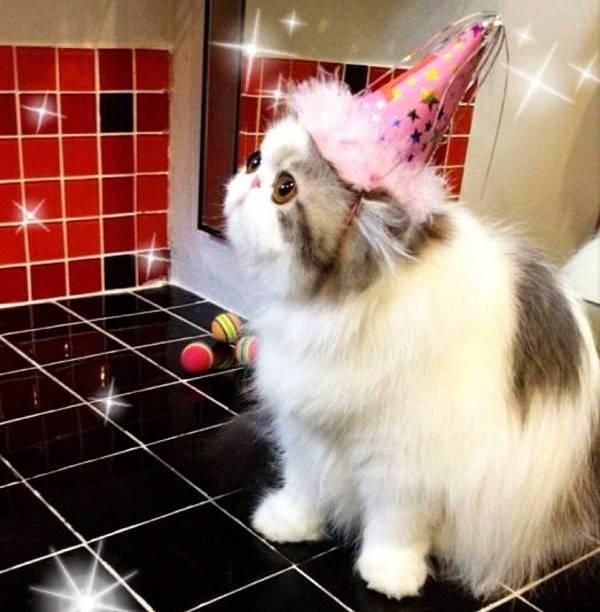 Hope Wears Princess Hat