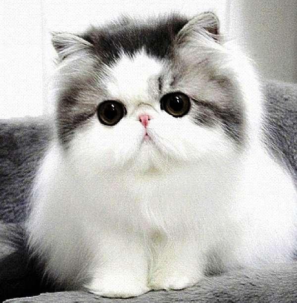 Hope Kitten