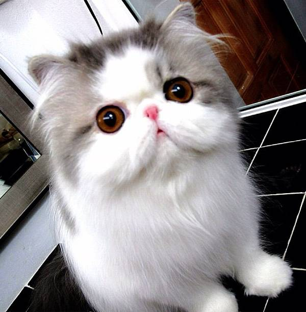 fluffiest-cats-instagram-hope-21