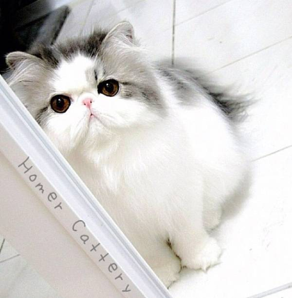 fluffiest-cats-instagram-hope-25