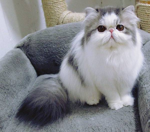 Hope Fluffiest Cats On Instagram