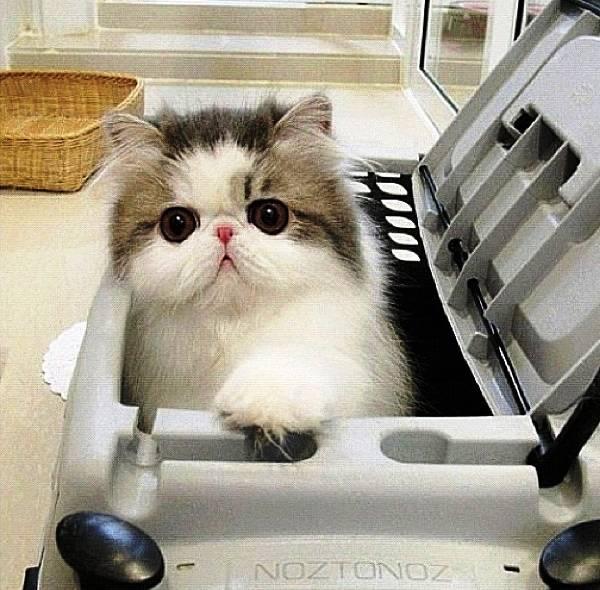 Fluffy Cat of Instagram Hope