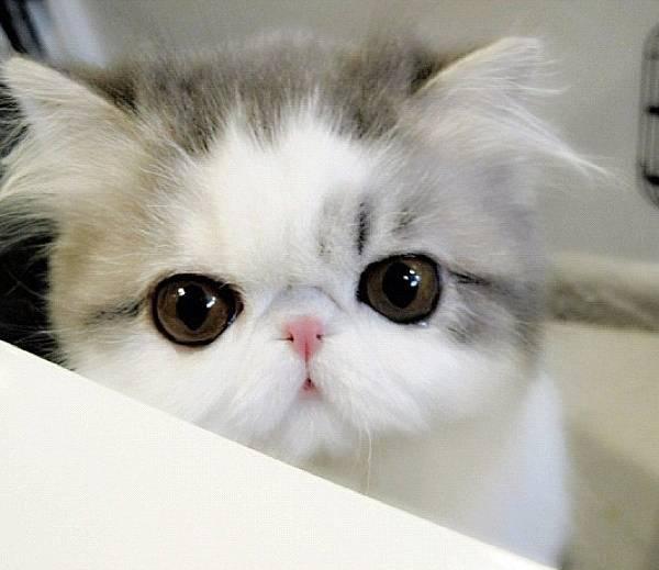 Instagram Hope as a Kitten