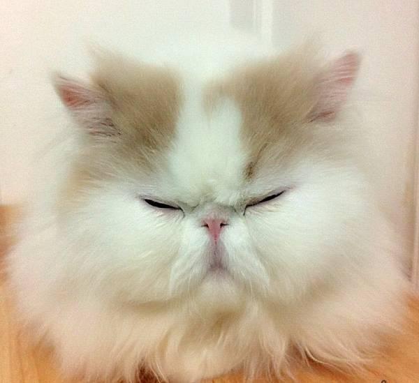 Instagram Cat Star Iliad