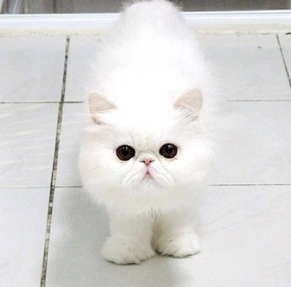 fluffiest-cats-instagram-themis-9