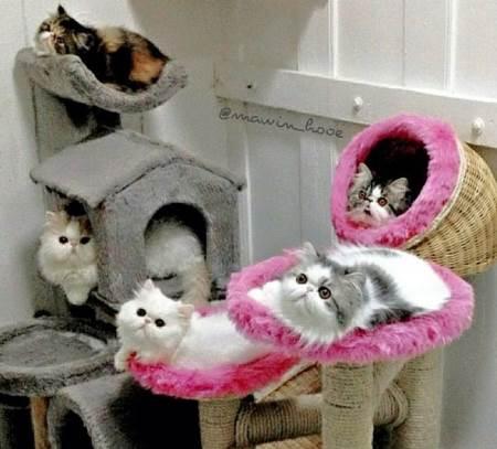 fluffiest-cats-instagram
