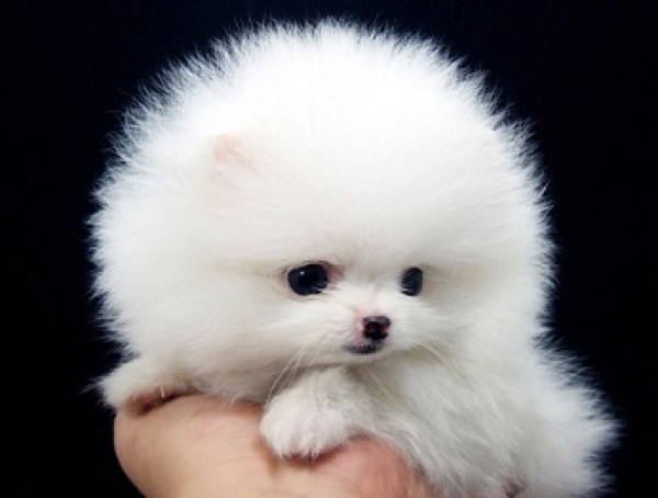 Fluffy Toy Dog