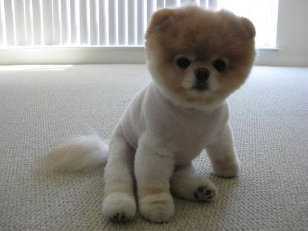 fluffiest-dogs-3
