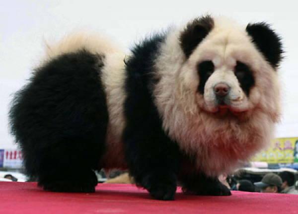Fluffy Dog Panda Dog