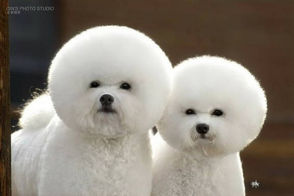 Fluffy Dog Helmet