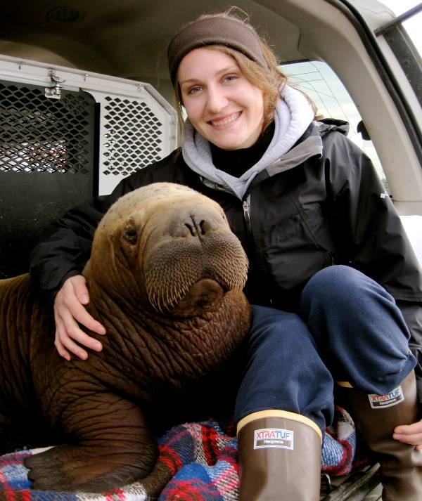 mitik orphaned baby walrus 14 17 Heartwarming Pictures Of Mitik, The Orphaned Baby Walrus