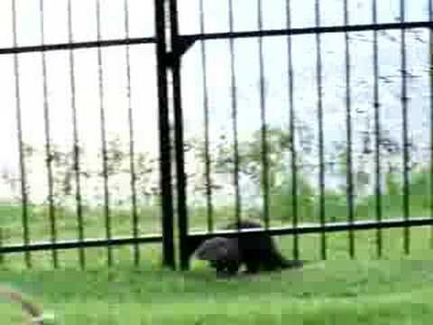A River Otter & Dog Become Play Pals
