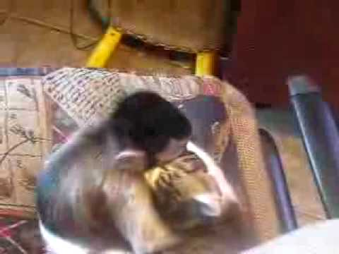 A Cat and Monkey Make Out