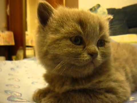 Adorable Kitten Can't Stay Awake