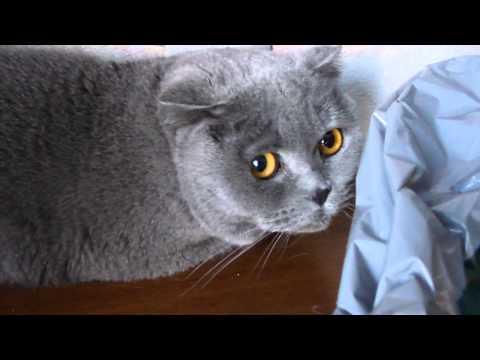 Guiltiest Cats Ever