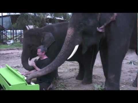 An Elephant Discovers A Piano