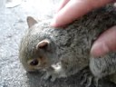 How To Massage A Squirrel