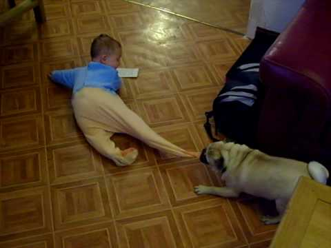 Pug And Baby Have Adorable Playtime