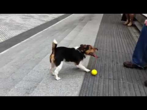 Dog Learns How To Play Catch With Himself