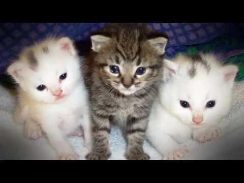 Kittens & Boobs