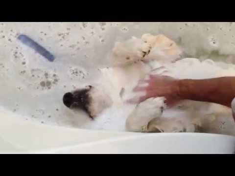 Dog Loves Baths