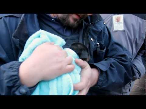 Rescuing A Trapped Puppy