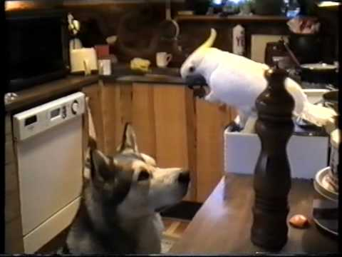 Dog And Bird Food Teamwork