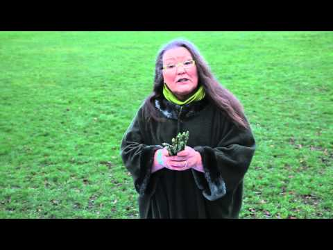 Woman Tells The Future… By Using Asparagus