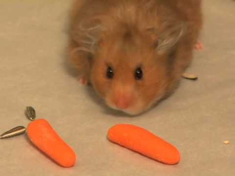 When Hamsters Get Greedy