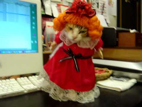 High Fashion Cat