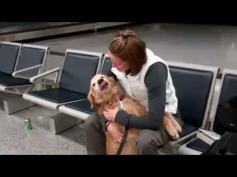 Dog Cries After Reuniting With Soldier Owner