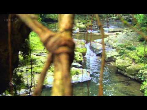 The Astounding Natural Bridge Of Meghalaya
