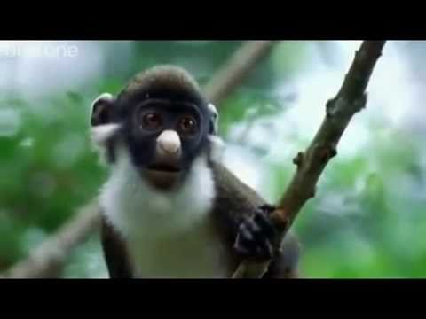 Hilarious Voiceovers On Animal Documentaries
