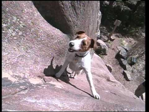 Meet Biscuit, The Rock Climbing Dog