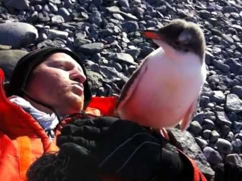 A Baby Penguin Meets A Human