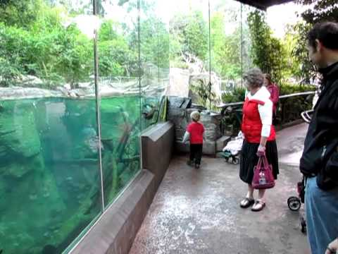 Playing With An Otter At The San Diego Zoo
