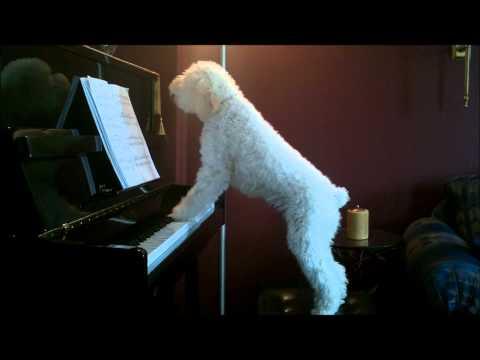 Doggy Composer