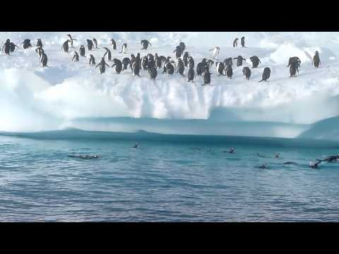 Penguins Having Fun In Antarctica