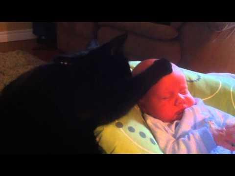 Cat Comforts Crying Baby To Sleep