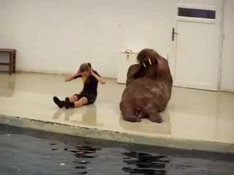 Walrus Workout