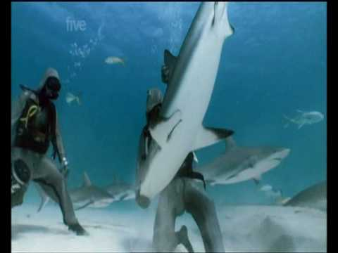 Diver Hypnotizes Sharks