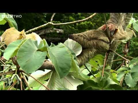 Sloths: The Next Big Internet Animal