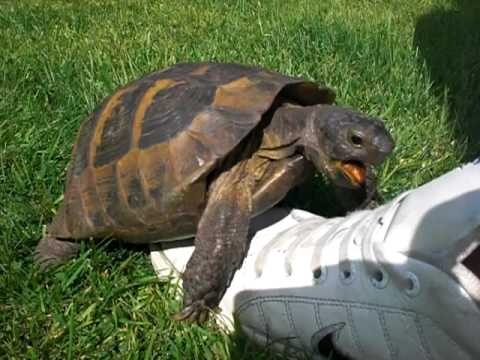 A Turtle And A Tennis Shoe