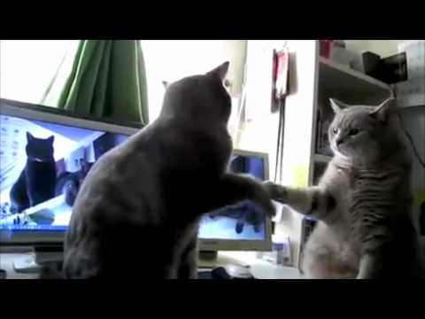 Cats Playing Patty Cake