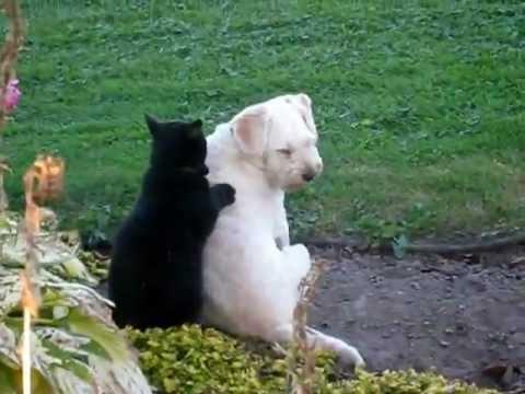 Cat Massages Dog