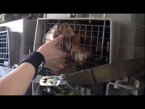 Rescued Laboratory Beagles See Sun For First Time