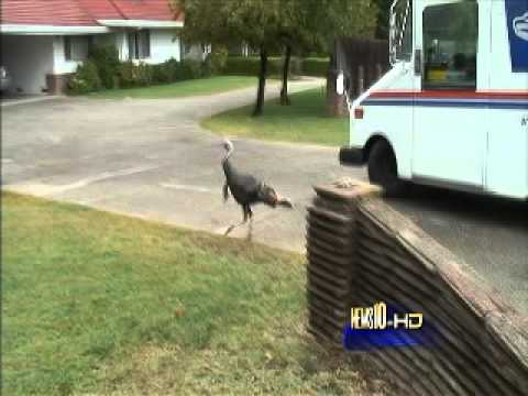 Woman Freaks Out… Because Of A Turkey